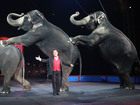 Ringling elephants perform in final circus