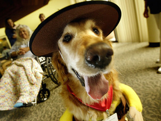 Halloween pet safety: Hide candy, secure cords