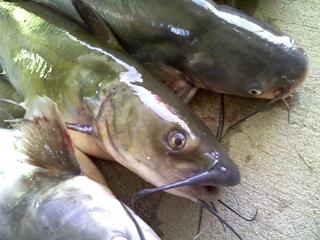 Dead catfish found in Florida woman's mailbox
