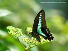 Springs Preserve Butterfly Habitat now open