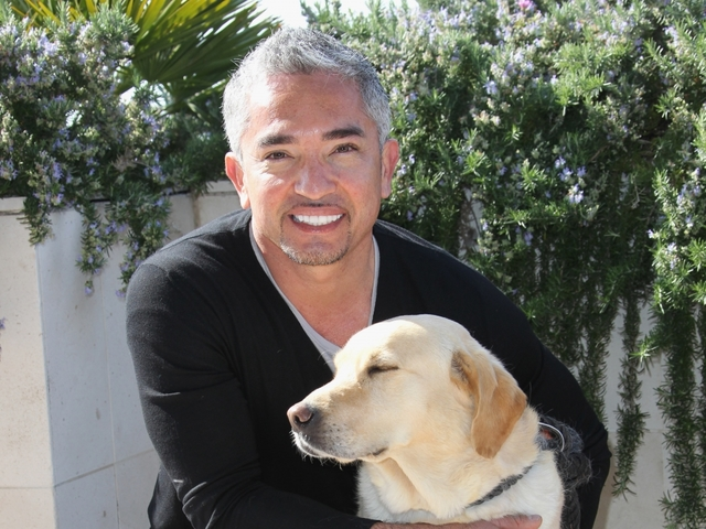 Dog Whisperer Cesar Millan investigated for animal cruelty