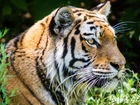 Woman attacked by tiger at Chinese wildlife park