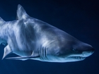 2016 Shark Week events, deals in Las Vegas