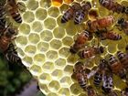 Thieves take 190K bees from Montana beekeeper