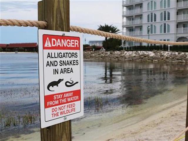 Two gators involved in Florida attack