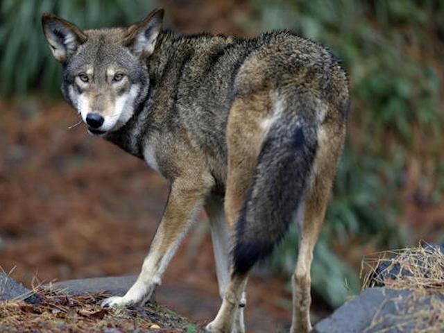 Warning of 'mass extinction' like dinosaurs as wildlife declines