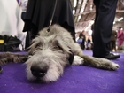 Animal Foundation's 'Best in Show' on April 23
