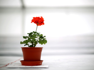 Surround yourself with plants to live longer
