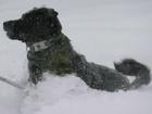 Heavy snow fell in Colorado this week