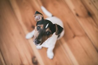 Questions to ask before getting a dog