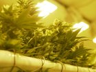 Nevada pot sales set another monthly record