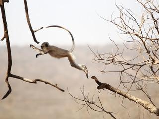 Monkey kills 12-day-old baby in India